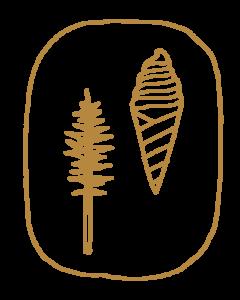 Sugarpine Stamp Tree